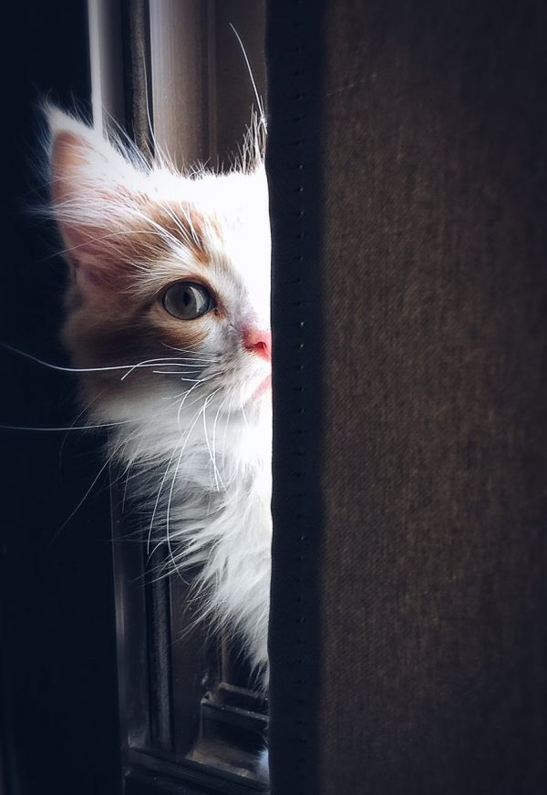 If I Were a Cat (Poetry)