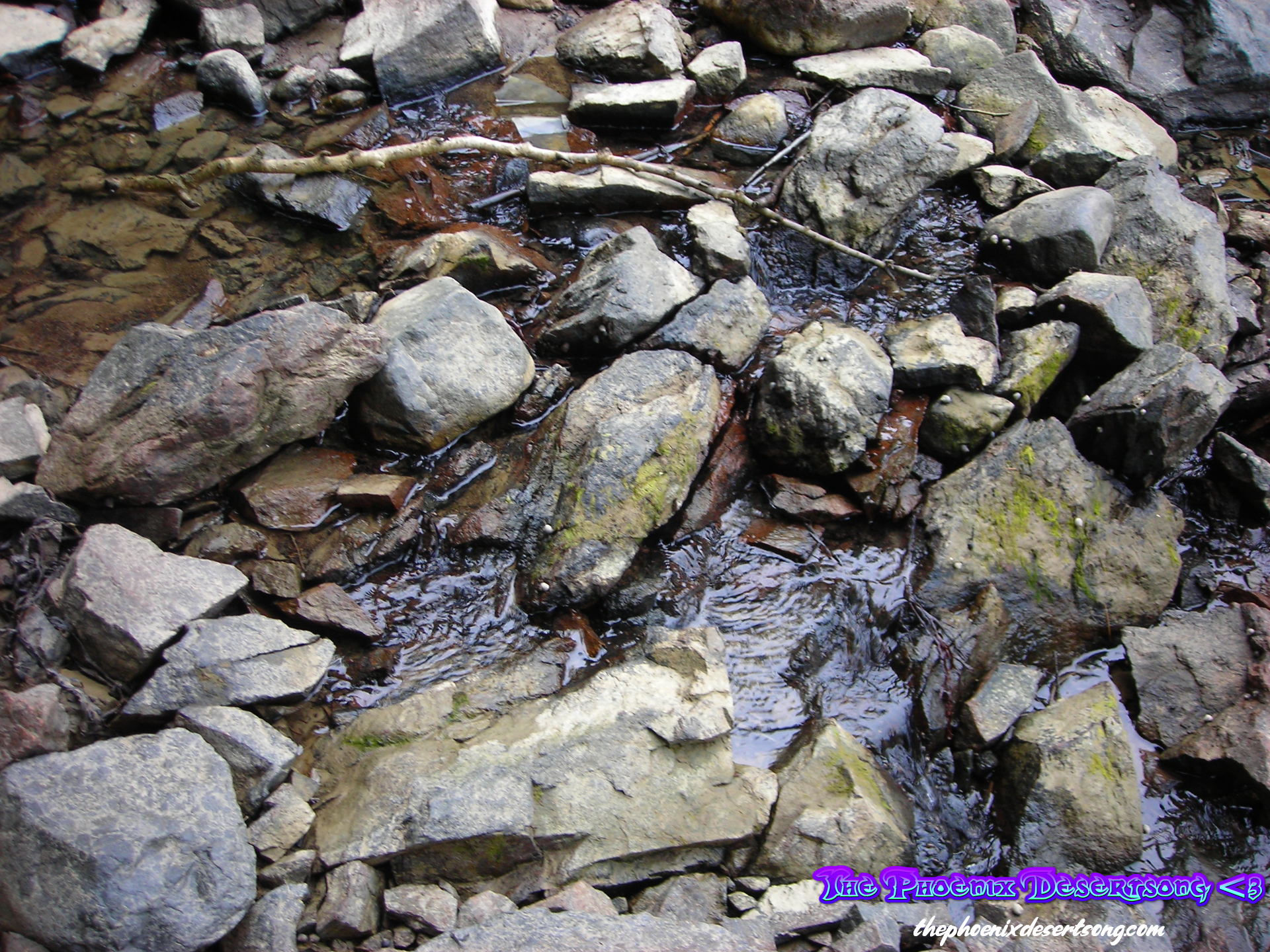 Babbling Brook in Maine